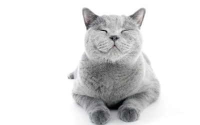 Feline Asthma and Pawprint Oxygen