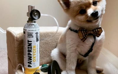 Pets of Pawprint Oxygen – Paco the Pomeranian