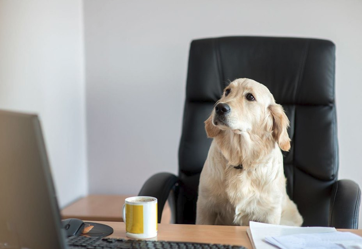 Pets in the workplace?