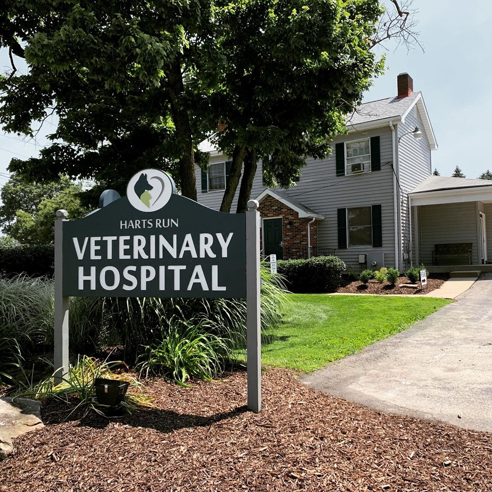 Lunch N' Learn: Harts Run Veterinary Hospital