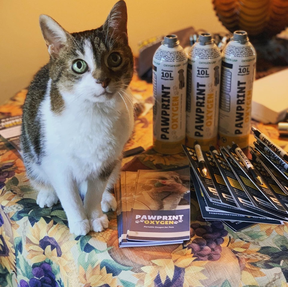Oxygen for Cats