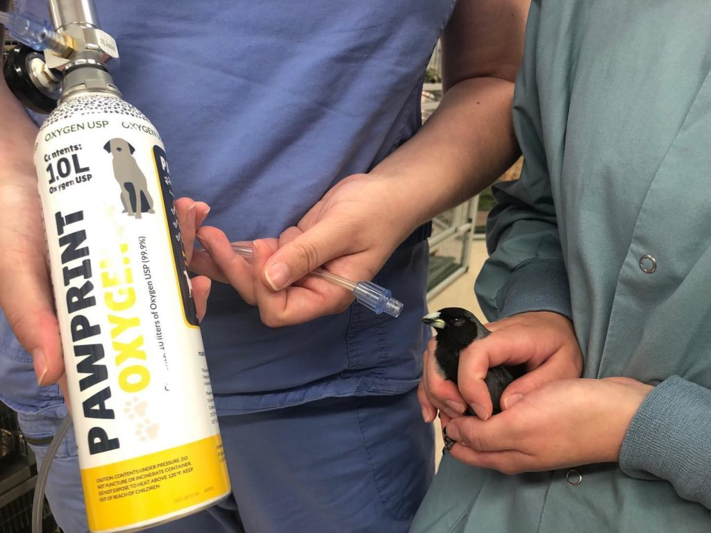 National Aviary Pawprint Oxygen