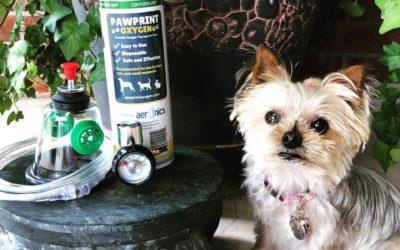 Pawprint Oxygen Review