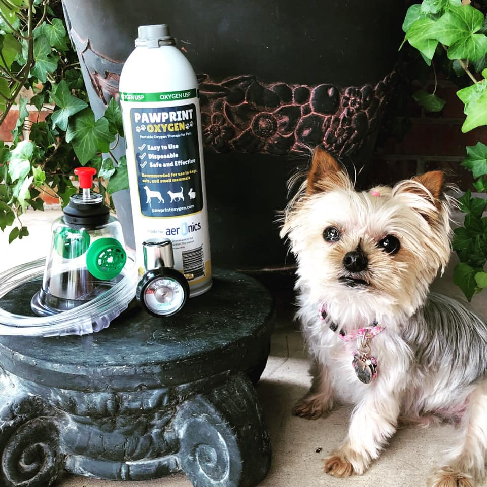 Pawprint Oxygen Review