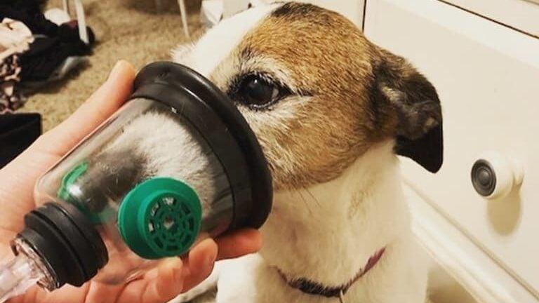 Dog Heart Murmur Oxygen Therapy