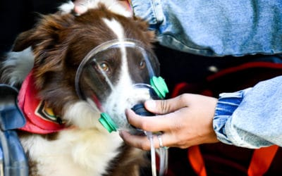 Using Oxygen On Your Pet