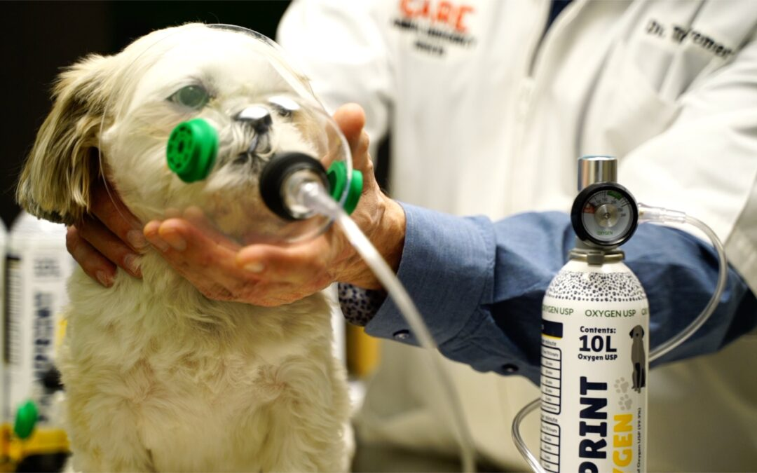 Rescue Oxygen for Pets I Pawprint Oxygen