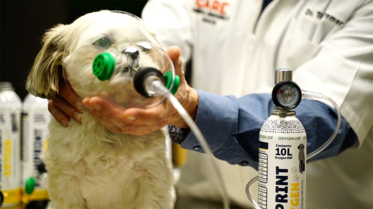 An Introduction to Rescue Oxygen for Pets