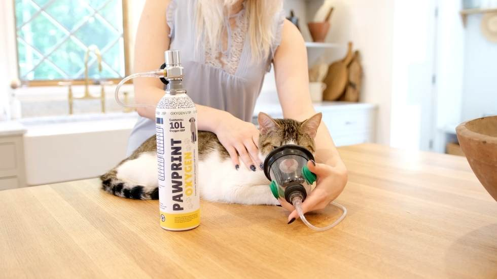 Methods of Oxygen Administration for Pets