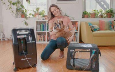 Medical Grade vs. Non-Medical Grade Oxygen Concentrators for Pets